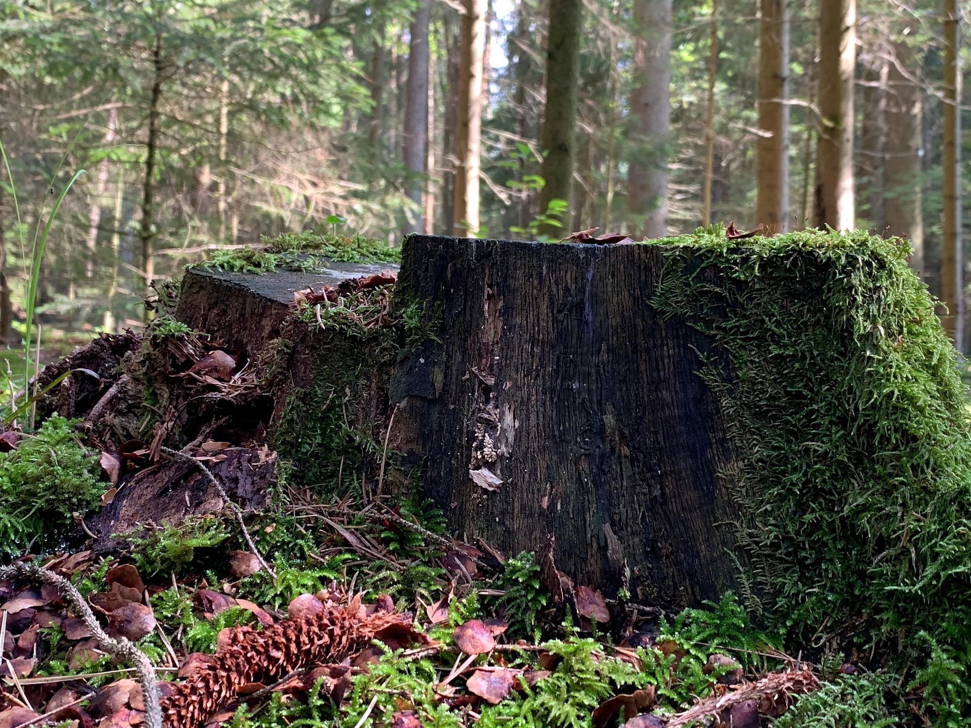 Baum pflanzen in Brandenburg - Baumgutschein