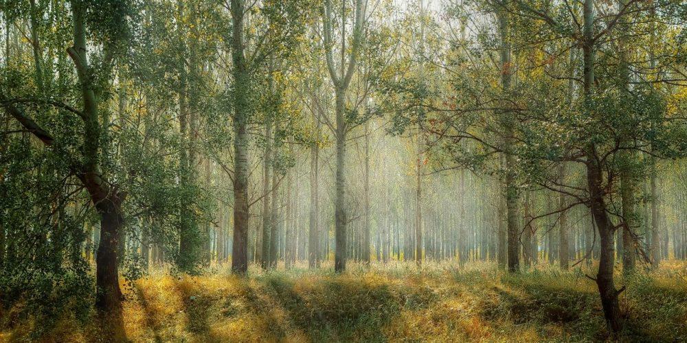 Projekte in der Nähe von Berlin am Tag des offenen Waldes besuchen kommen