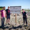 Baumgutschein-Projekt-Pflanzen-Rebstöcke-Brandenburg
