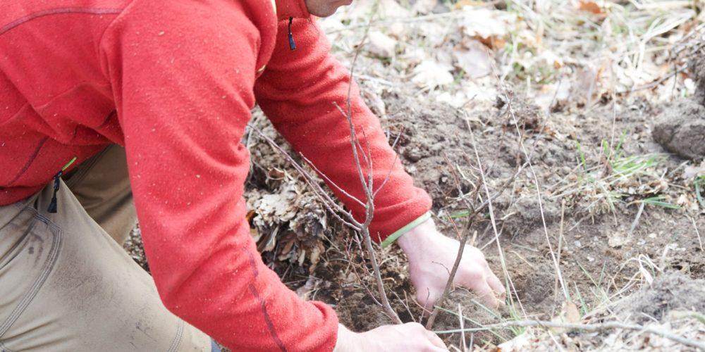 Baum pflanzen gutschein