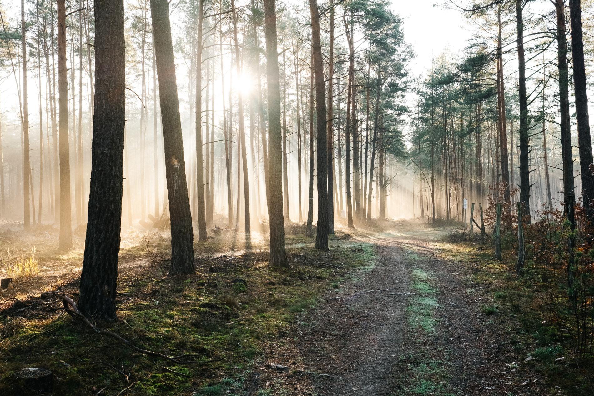 Baumgutschein-Baum-schenken-und-pflanzen-Brandenburg
