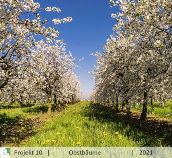 Obstbaum schenken Streuobstwiese Brandenburg
