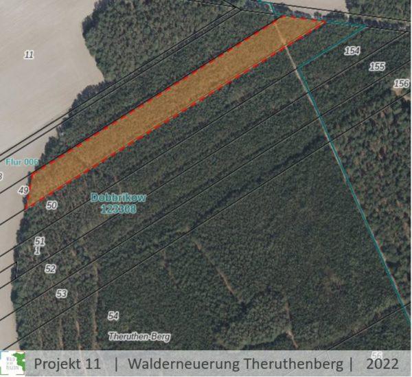 Walderneuerung-Baumgutschein-Brandenburg-Baum-pflanzen-geschenk